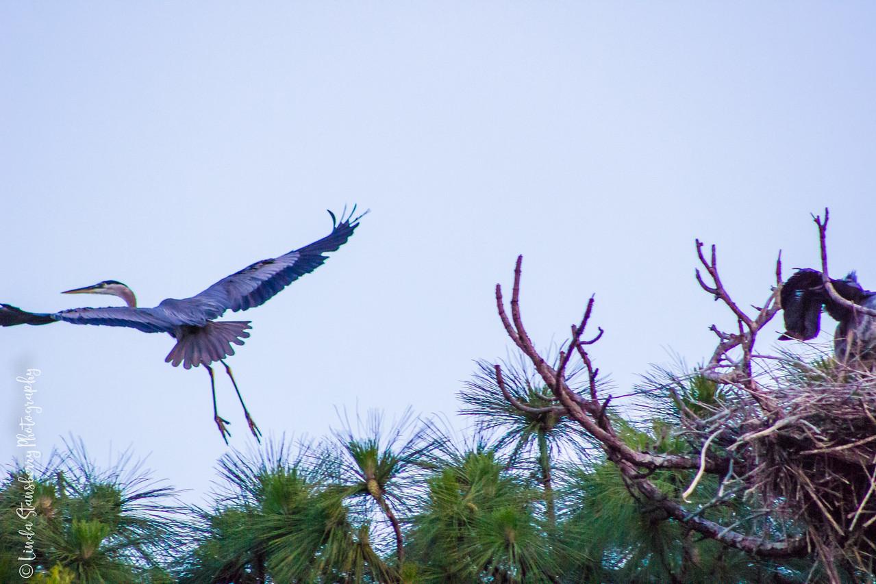 029-Hawk AE Day 6