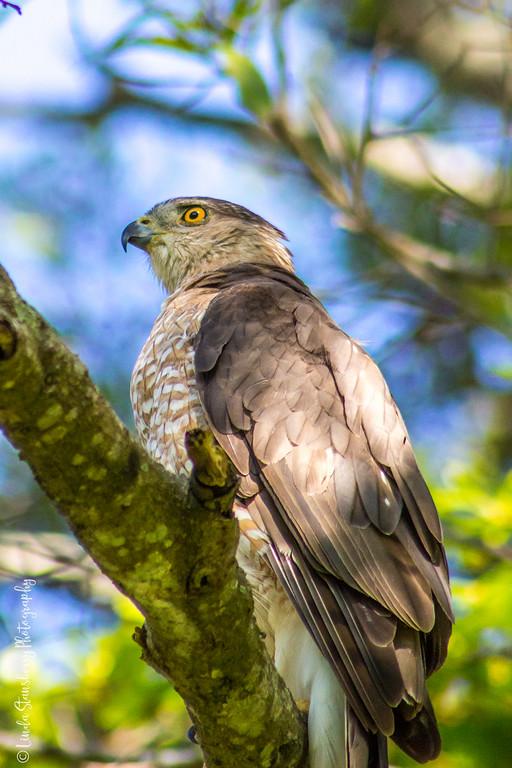 008-Hawk AE Day 2