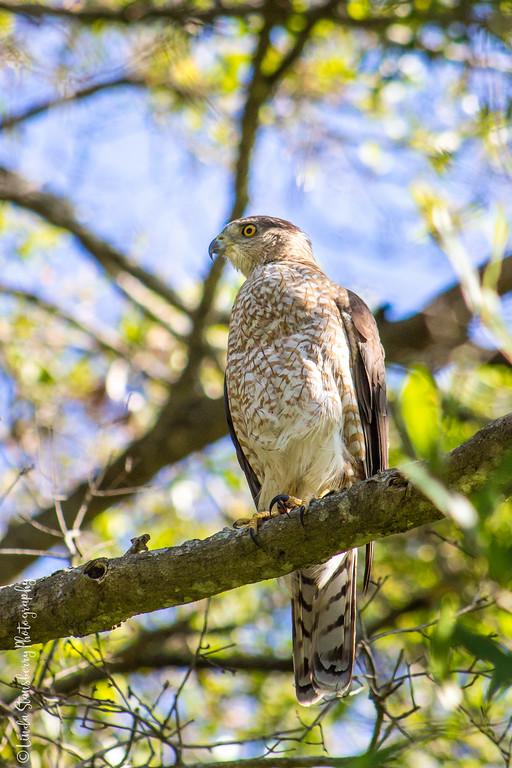 015-Hawk AE Day 2