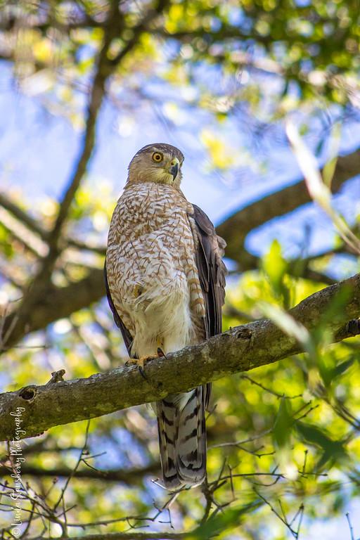 013-Hawk AE Day 2