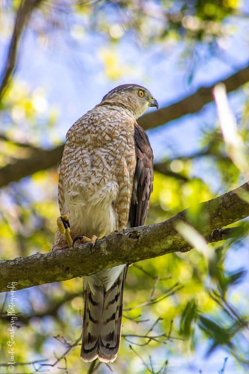 023-Hawk AE Day 2