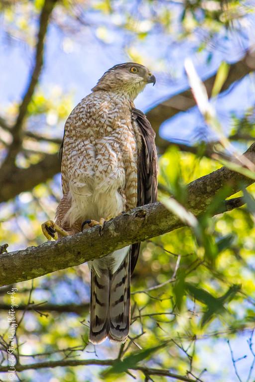 021-Hawk AE Day 2