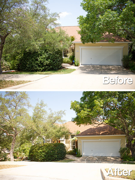 TX Tree Tamers Before & After 11