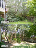 TX Tree Tamers Before & After 01