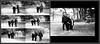 12 Sassenberg photo book