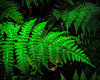 Cool Ferns