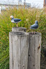 Wooden puffins outside of The Landing Restaurant in Bay City, Oregon.