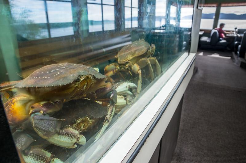 Crabs waiting in Pirate's Cove Restaurant in Garibaldi, Oregon.