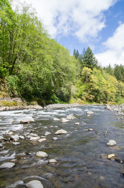 The Wilson River, near Tillamook, Oregon
