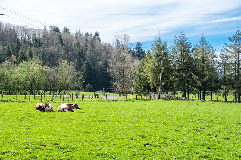 Bennett Family Farm in Tillamook, Oregon