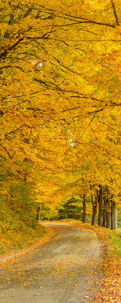 Canopy in Yellow