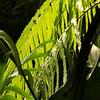 Plants 2-2