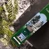 Winter Spruce-13