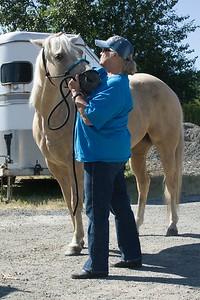 Horses 006