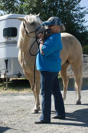 Horses 005