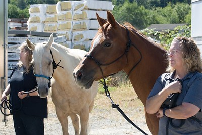 Horses 035