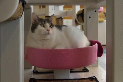 Colony Room Cats 045