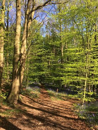 Woodland Treasure Hunt