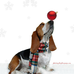Bassett Hound with Christmas Ornament