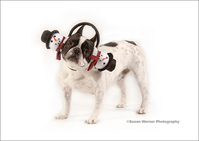 Holiday Pet Portraits