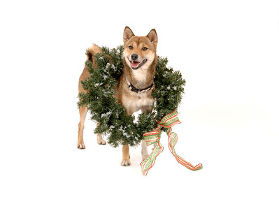 Maile with holiday wreath