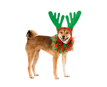 Maile wearing antlers