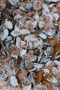 Reef building - Sarah Jane Moore-0340