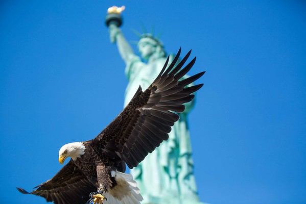 "New York, New York, American Bald Eagle ""Challenger"" at the Statue of Liberty during the Memorial Day, May 25 2015 <br /> <br /> Photo Credit/John Nacion IMAGING<br /> <br /> <a href=""http://www.eagles.org/aefsplash/"">http://www.eagles.org/aefsplash/</a>"