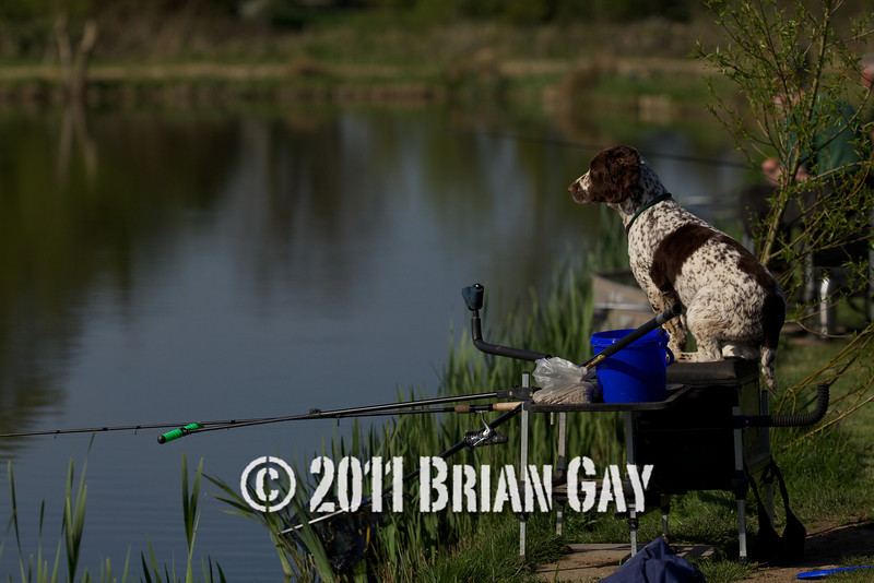 dog sitting on a fishing box with rod.