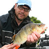 A big perch from Somerset's Durleigh Reservoir. © Brian Gay