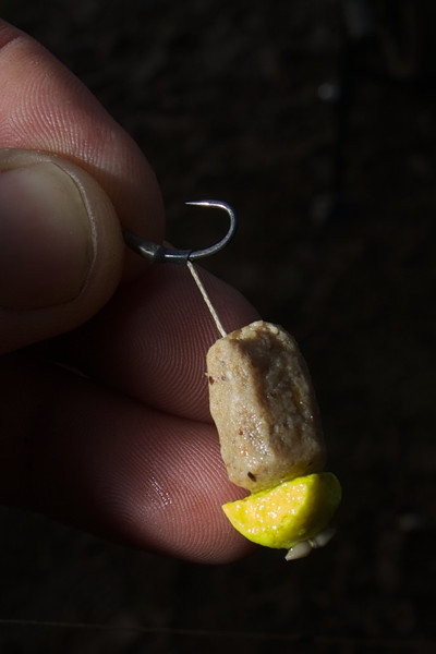 whittled down cell boilie plus a slither of a yellow pop-up boilie hook bait
