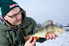 venues where the water is clear tend to produce more colourful perch than venues that are heavily coloured. This fat stripy is resplendent in its winter coat. It fell to a No.1 Mepps spinner in bronze with the barbs crushed to comply with the fishery barbless ruling. © 2013 Brian Gay