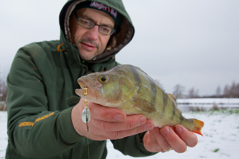 Ihe second perch of the day came after I changed to a silver No.1 mepps spinner. It came from the shallower end of the lake and hit on the second pass through the swim. © 2013 Brian Gay