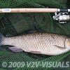 "Chub 5-10-0, Longham, Dorset Stour shoot, rod Garbolino G-series 13 Power Float, handle 21 "" spoon 30inch Korum Barbel Spoon. 161009. © 2009 Brian Gay."