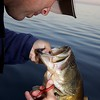 Unhooking a largemouth freshwater bass.