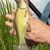 A close-up of a smaller Sunset tench.