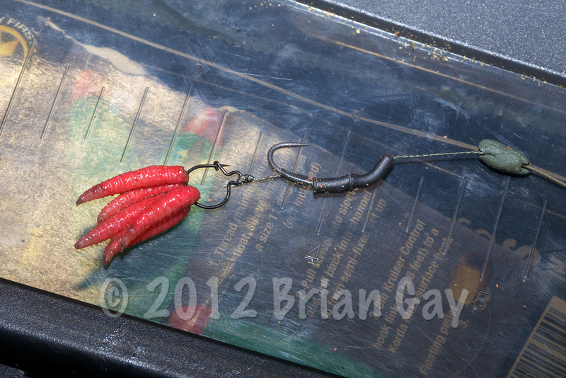 The maggot clip rig with five dead red maggots, this is the very rig that that went on to catch the 26-4-0 mirror. Rig details - Small Korda maggot clip, Fox SSP barbless size 10 hook, ACE line aligner kicker, Korda N-trap 15 lb weedy green, blocb of ESP weed green putty. © 2012 Brian Gay