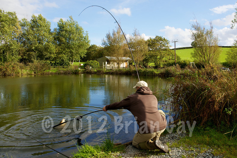 Mid afternoon and the actions starts again - Brian Gay nets a 14 lb common carp at peg 1 on the Milemead Specimen Lake. © 2012 Brian Gay