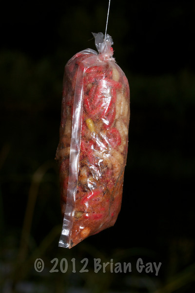 Loaded PVA bag with maggots and maggot rig. © 2012 Brian Gay