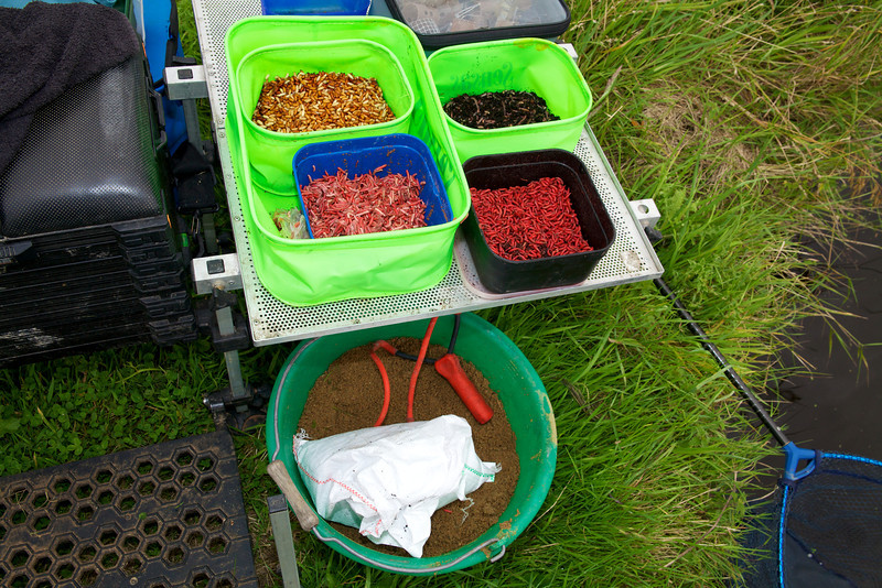 baiut for the Huntspill bream. Casters, dendrobaena worms, dead red maggots, live red maggots, a bucket of groundbait. © 2011 Brian Gay