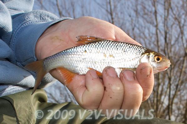 A typical Kenn roach. River Kenn session 201109. © 2009 Brian Gay