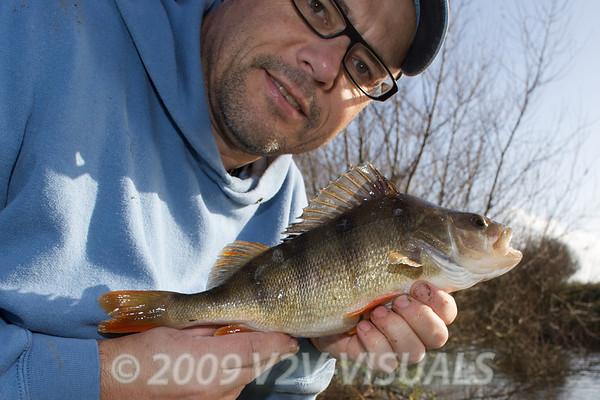 displaying a pound-plus perch. River Kenn session 201109. © 2009 Brian Gay