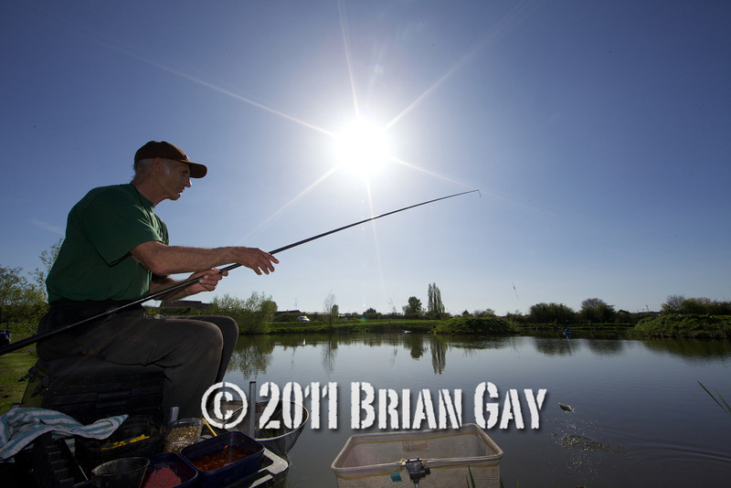 The sun shines brightly in a deep blue cloudless sky as Brian Gatiss swings in a small silver fish on a top kit, Tile pond at the Sedges, Bridgwater, Somerset. © 2011 Brian Gay