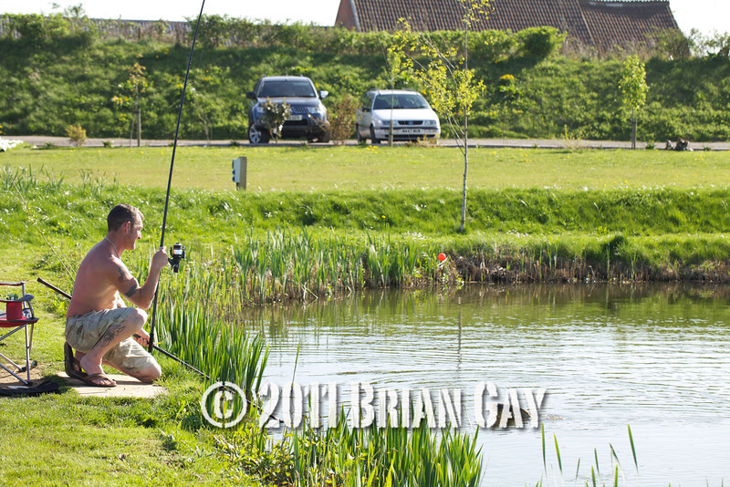 Travis Robinson kneels to net a common carp caught on floating bread from the Tile pond at The Sedges, Bridgwater, Somerset. © 2011 Brian Gay