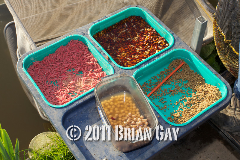 Jamie Cook's bait tray for the top kit challenge at the Sedges, Bridgwater, Somerset. © 2011 Brian Gay