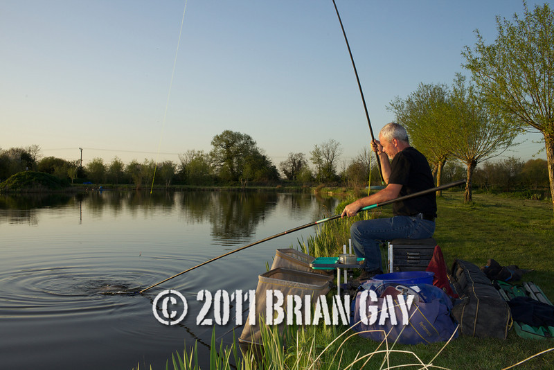 In the glow of the evening sun Jamie Cook nets a decent elastic stretching fish during the top kit challenge at the Tile pond, Sedges, Bridgwater, Somerset. © 2011 Brian Gay