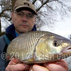 Brian Gay displays a 3 lb chub caught on stick float and maggot from Beat 2 on the Dorset Stour Throop Fishery.