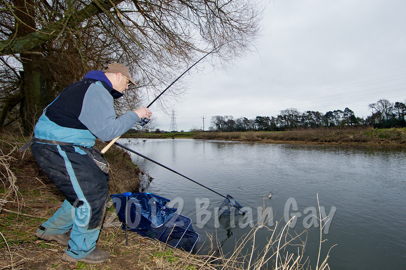 Brian Gay prepares to net a chub caught on stick float and single maggot on Beat 2 of the Dorset Stour Throop Fishery.