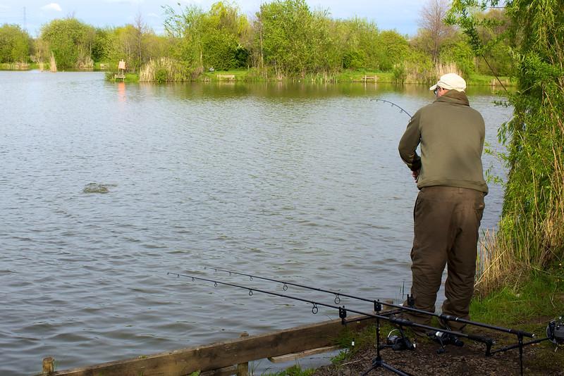 carp action on the Shimano Tribla 11 ft. 2.75 lb tc rod and method feeder