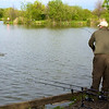 carp action on the Shimano Tribla 11 ft. 2.75 lb tc rod and method feeder